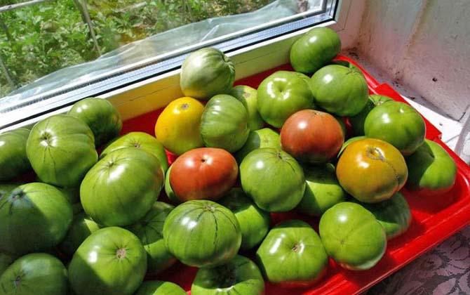 Какие помидоры подходят для дозревания