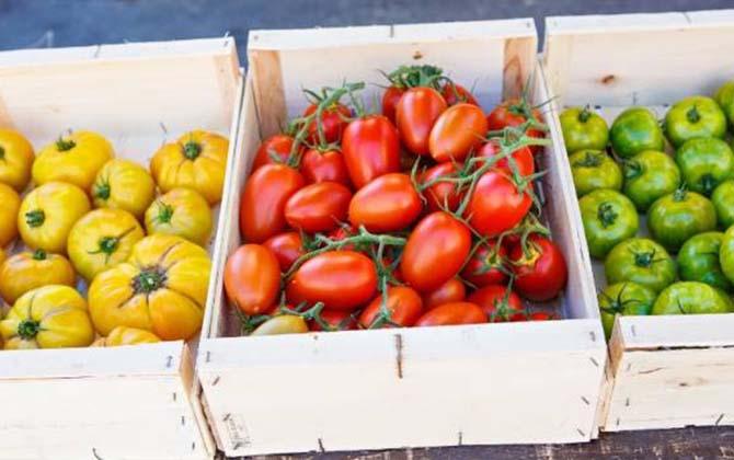 Дозревшие помидоры в ящиках